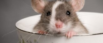 Как избавиться от мышей в погребе