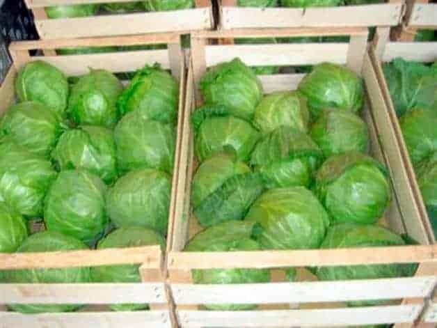 Как хранить капусту в ящиках