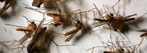 Советы и рекомендации: как избавиться от комаров в подвале частного дома