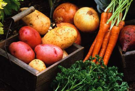 хранение картофели и моркови