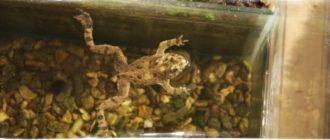Как избавиться от лягушек в подвале