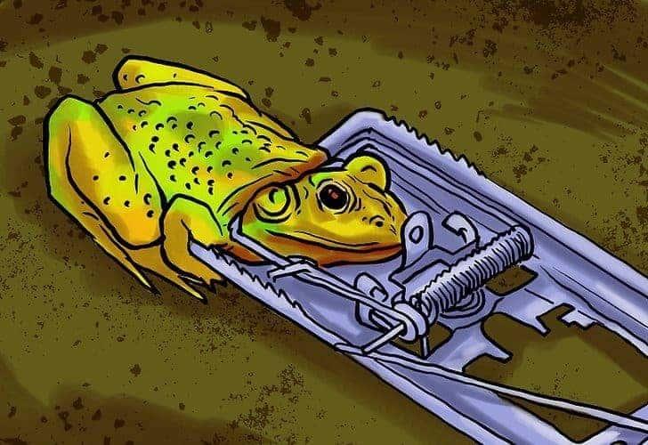 Мышеловки для лягушек
