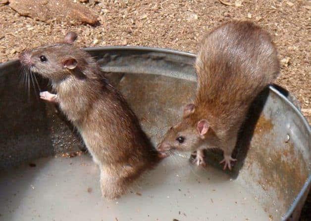 вред от мышей