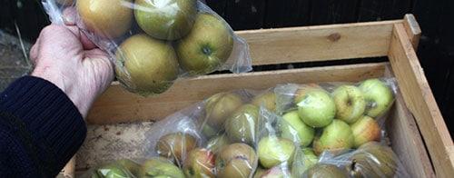 хранения яблок в пакетах